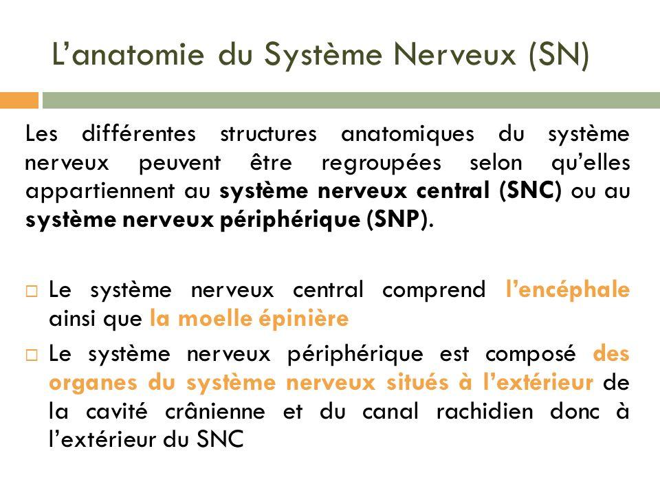 L'anatomie du Système Nerveux (SN)