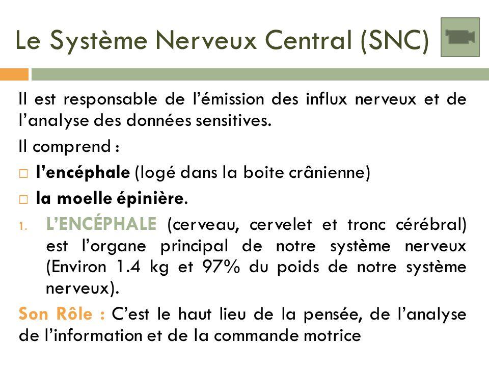 Le Système Nerveux Central (SNC)