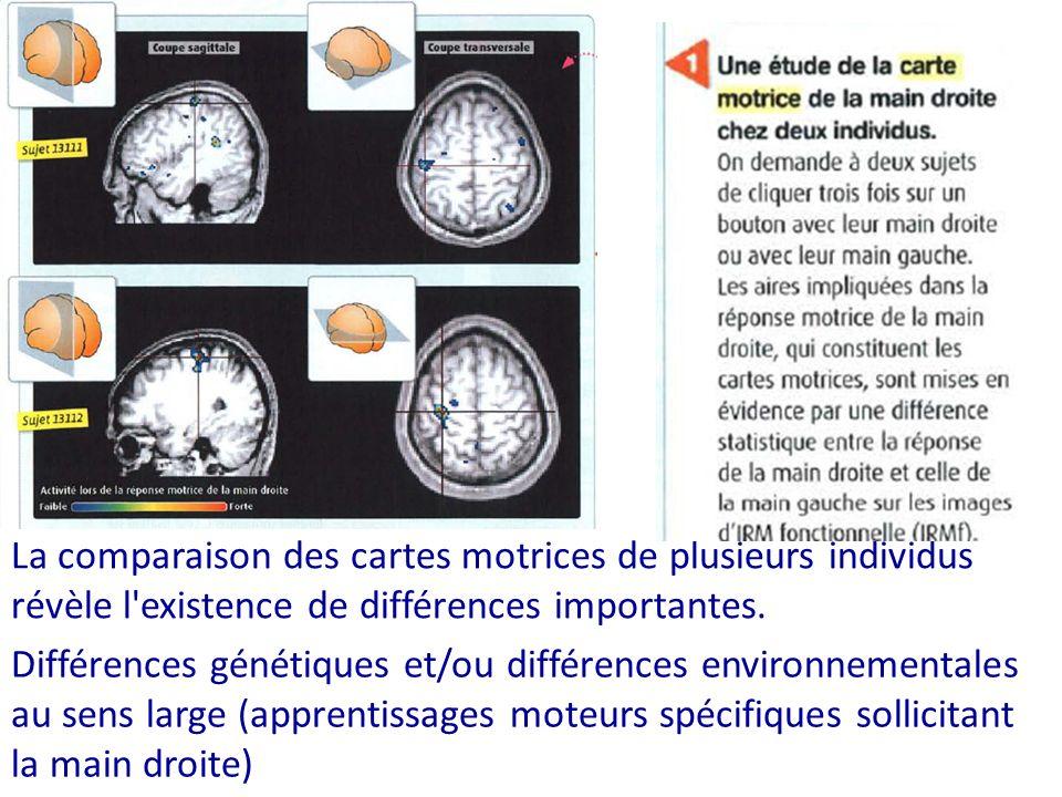La comparaison des cartes motrices de plusieurs individus révèle l existence de différences importantes.