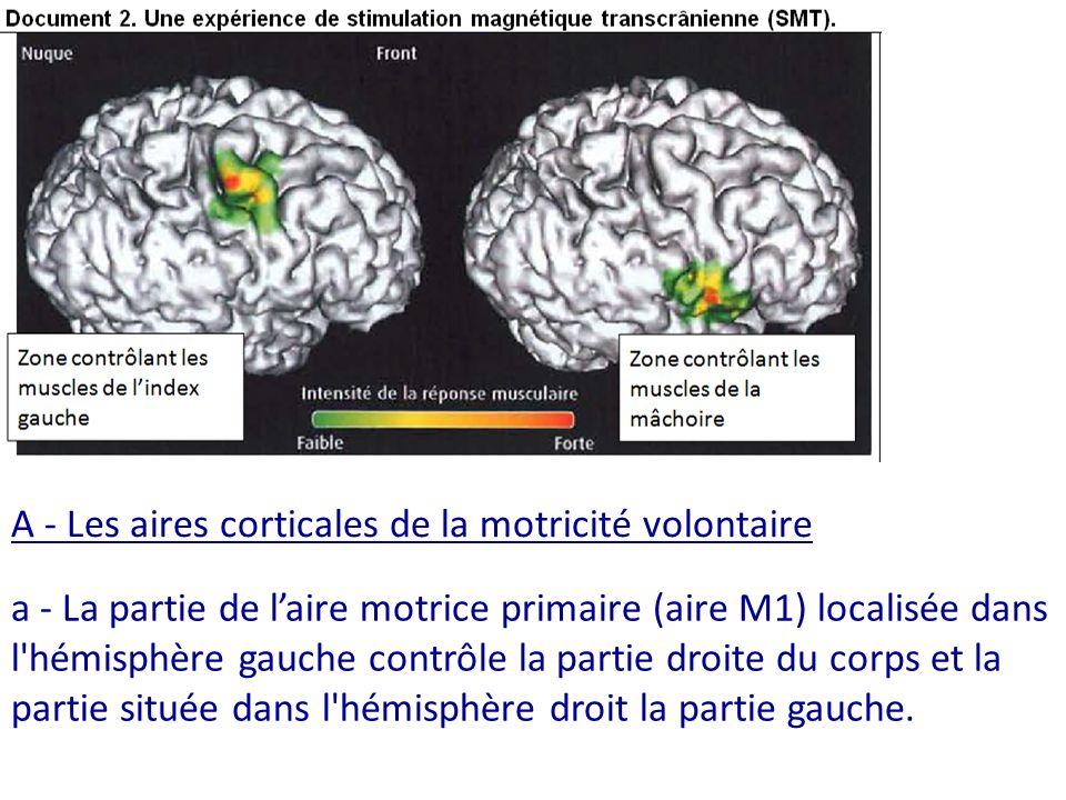 A - Les aires corticales de la motricité volontaire