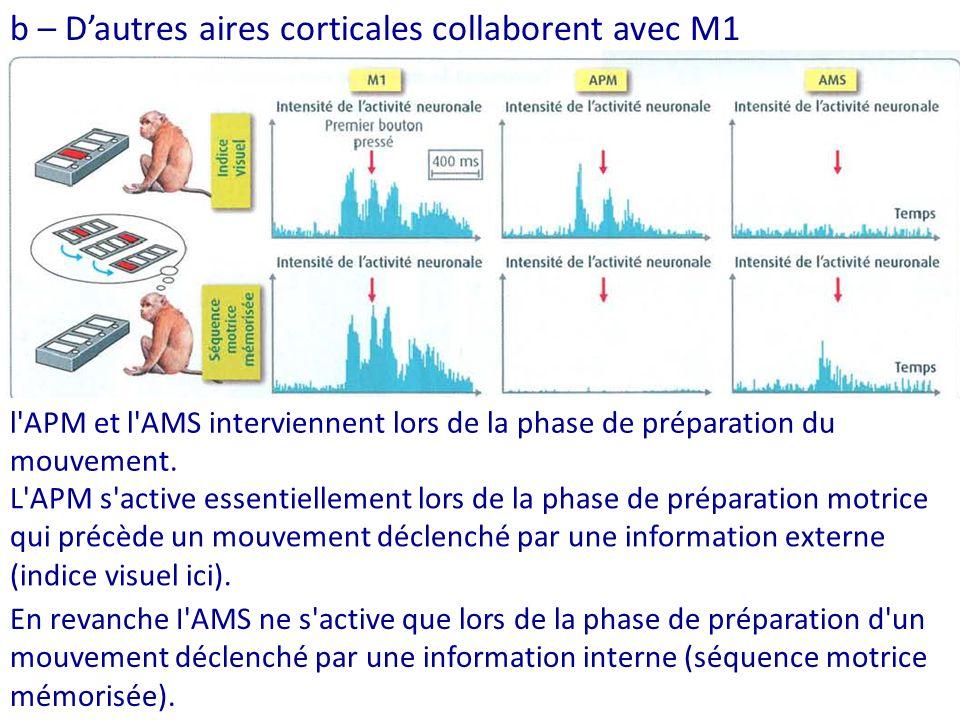 b – D'autres aires corticales collaborent avec M1