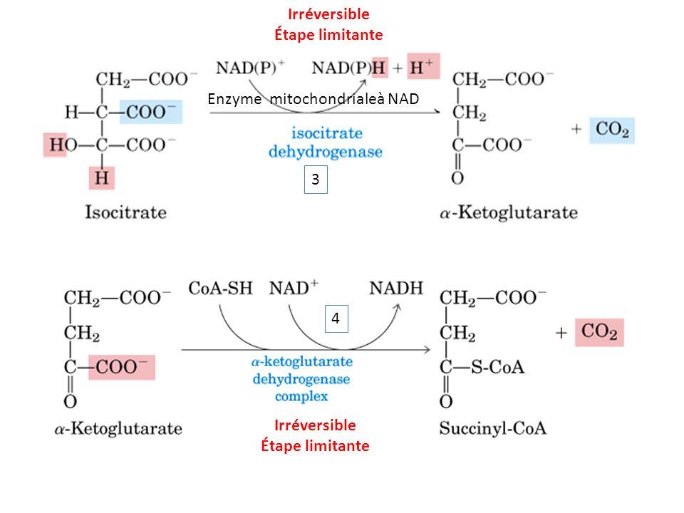 Irréversible Étape limitante Enzyme mitochondrialeà NAD 3 4 Irréversible Étape limitante