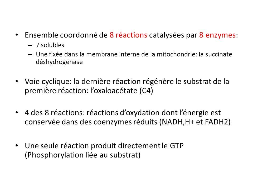 Ensemble coordonné de 8 réactions catalysées par 8 enzymes: