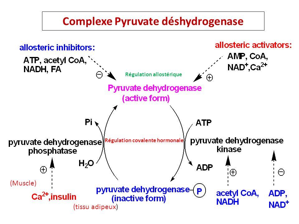 Complexe Pyruvate déshydrogenase