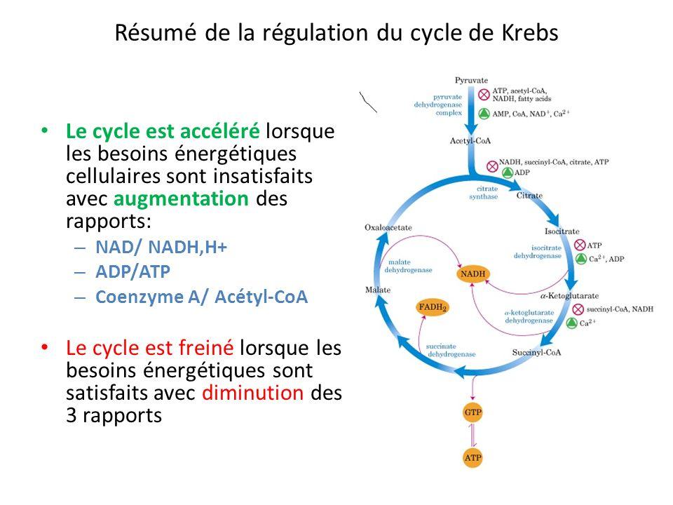 Résumé de la régulation du cycle de Krebs