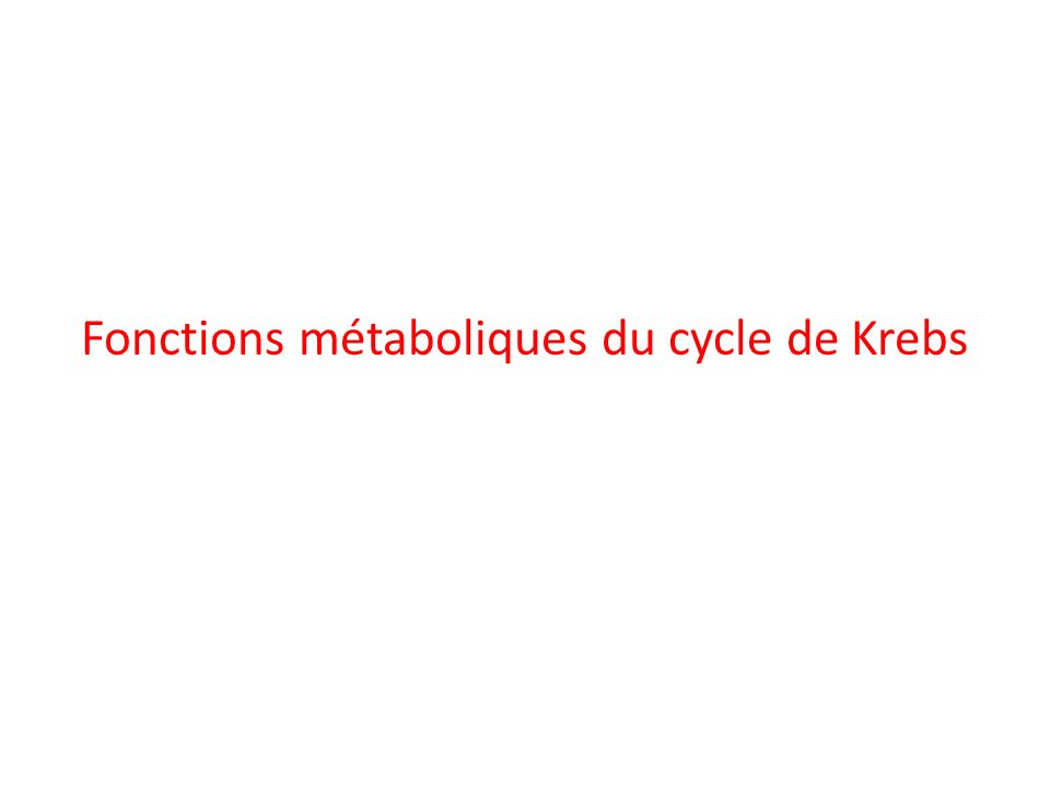 Fonctions métaboliques du cycle de Krebs