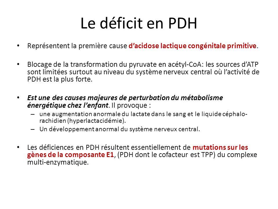 Le déficit en PDH Représentent la première cause d'acidose lactique congénitale primitive.