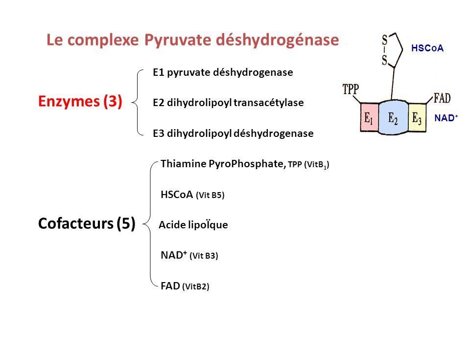 Le complexe Pyruvate déshydrogénase
