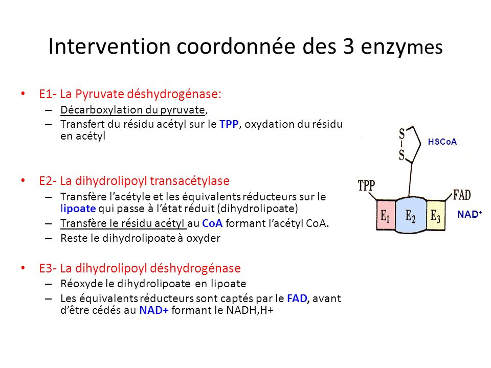 Intervention coordonnée des 3 enzymes