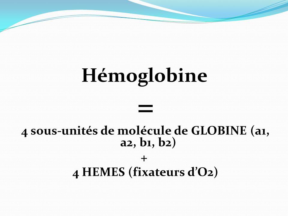 4 sous-unités de molécule de GLOBINE (a1, a2, b1, b2)