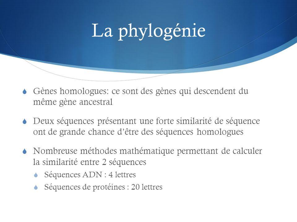 La phylogénie Gènes homologues: ce sont des gènes qui descendent du même gène ancestral.