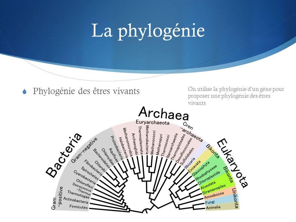 La phylogénie Phylogénie des êtres vivants