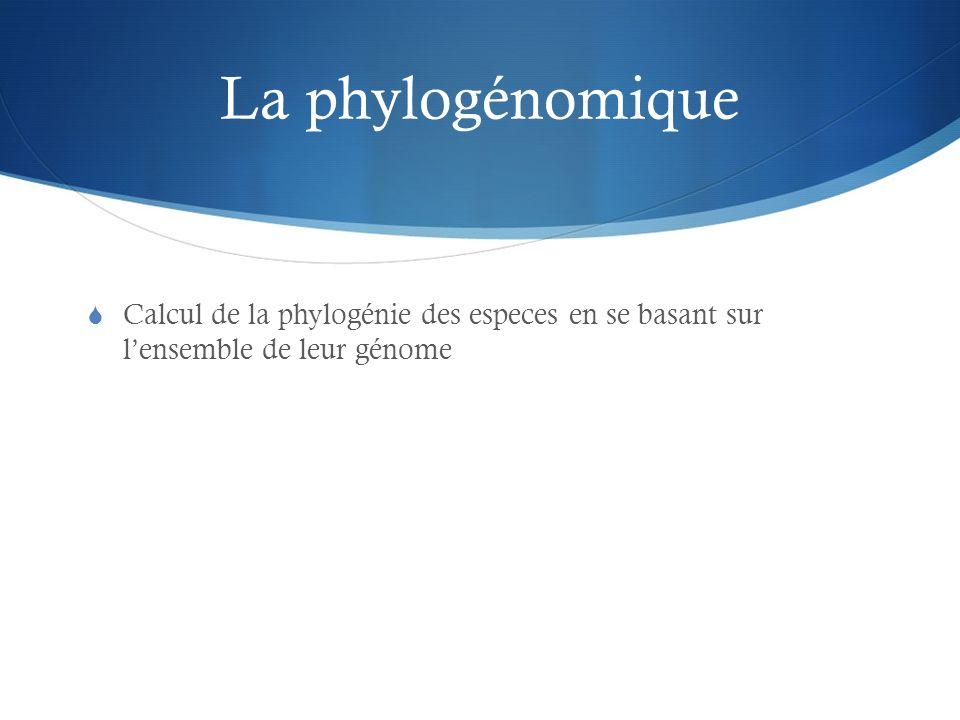 La phylogénomique Calcul de la phylogénie des especes en se basant sur l'ensemble de leur génome