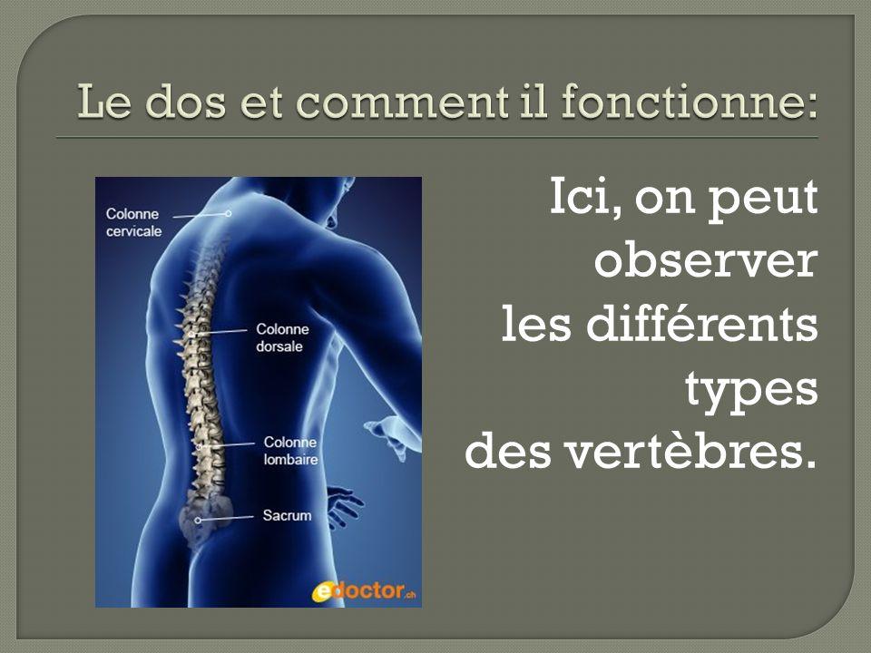 Le dos et comment il fonctionne: