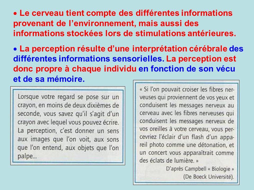 Le cerveau tient compte des différentes informations provenant de l'environnement, mais aussi des informations stockées lors de stimulations antérieures.