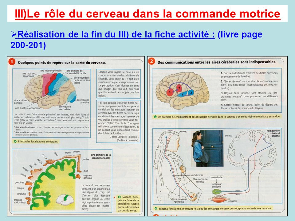 III)Le rôle du cerveau dans la commande motrice