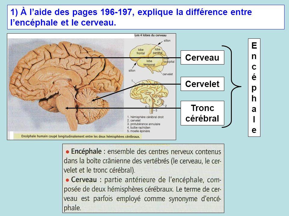 1) À l'aide des pages 196-197, explique la différence entre l'encéphale et le cerveau.