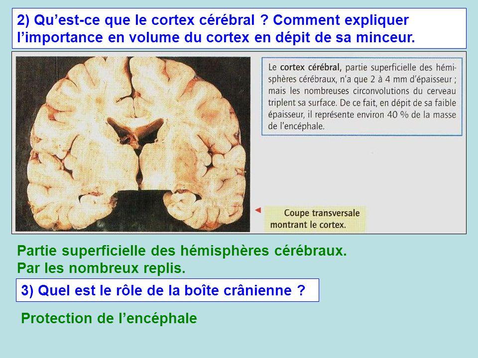 2) Qu'est-ce que le cortex cérébral