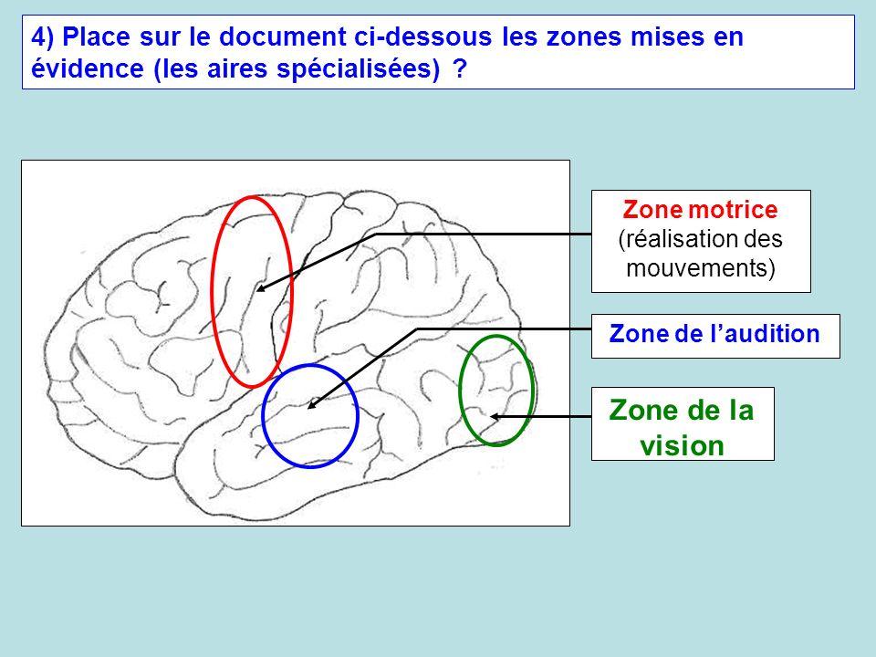 Zone motrice (réalisation des mouvements)