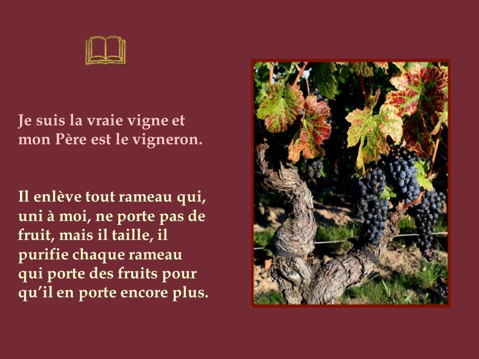 Je suis la vraie vigne et mon Père est le vigneron.