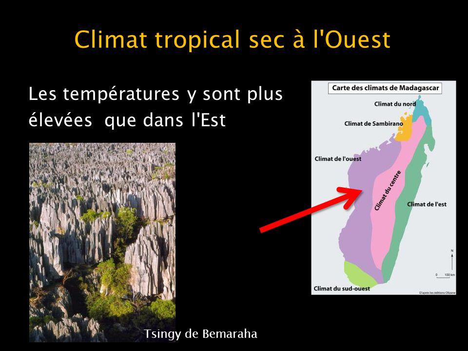 Climat tropical sec à l Ouest