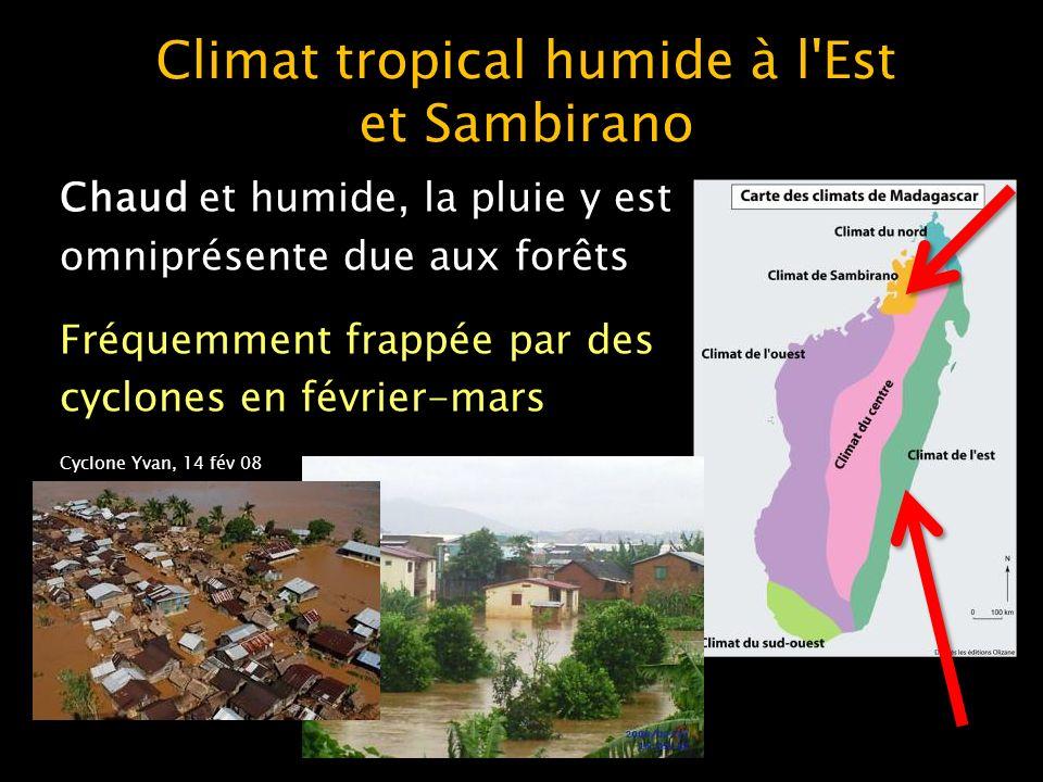 Climat tropical humide à l Est et Sambirano