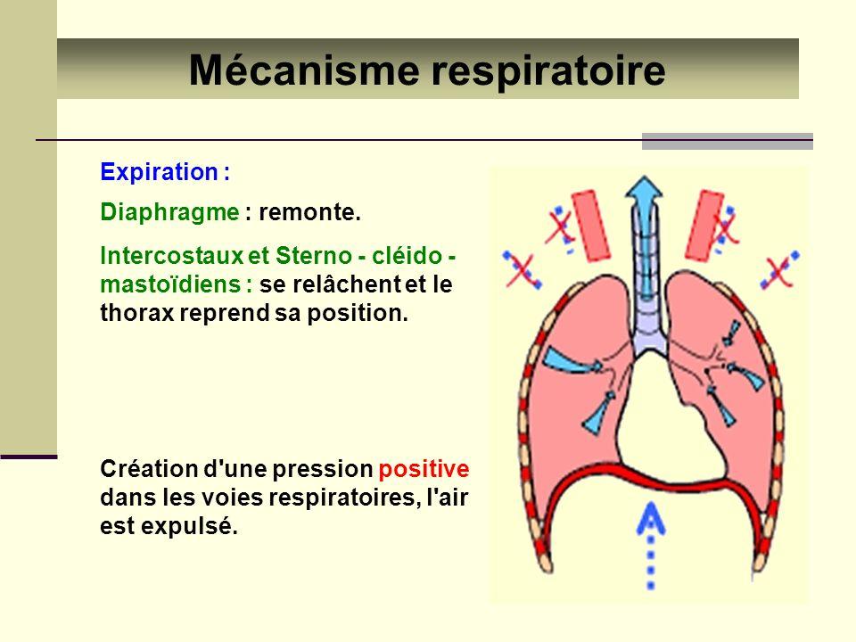 Mécanisme respiratoire
