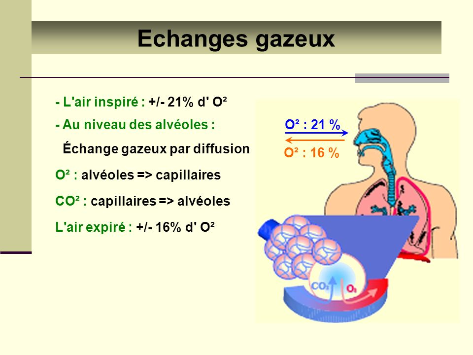 Echanges gazeux - L air inspiré : +/- 21% d O²