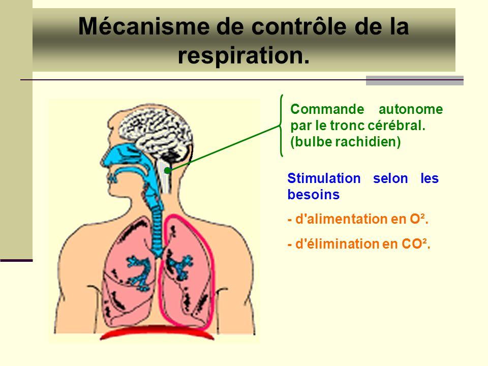 Mécanisme de contrôle de la respiration.