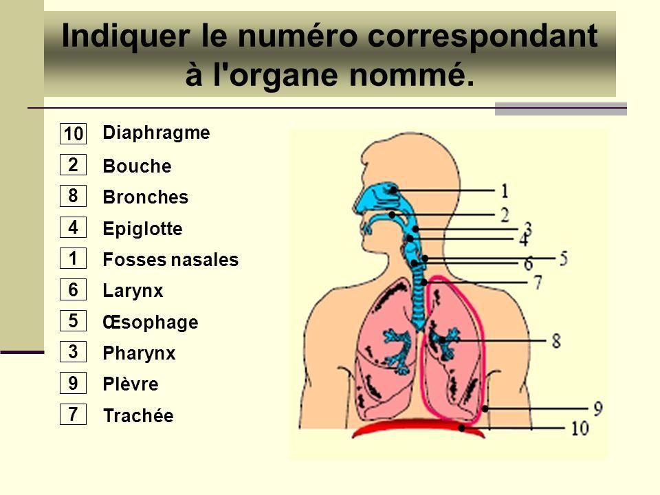 Indiquer le numéro correspondant à l organe nommé.