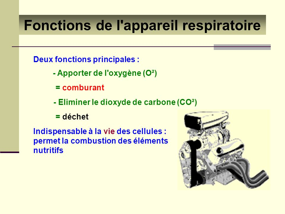 Fonctions de l appareil respiratoire