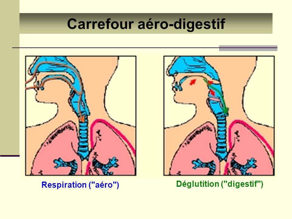 Carrefour aéro-digestif Déglutition ( digestif )