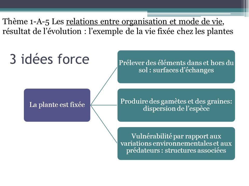 Thème 1-A-5 Les relations entre organisation et mode de vie, résultat de l'évolution : l'exemple de la vie fixée chez les plantes