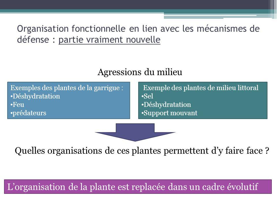 Quelles organisations de ces plantes permettent d'y faire face