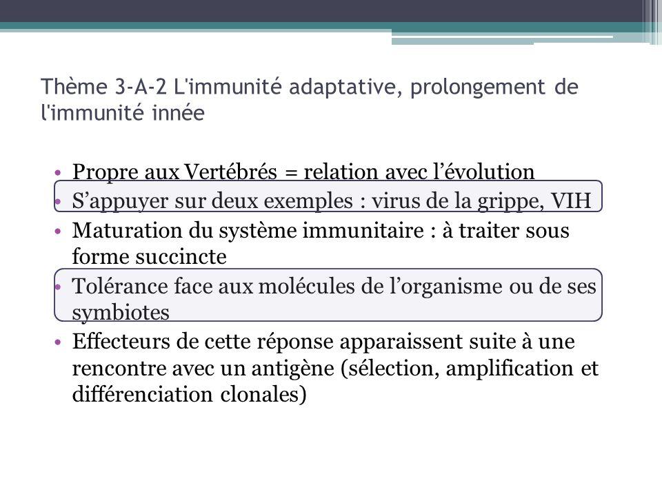 Thème 3-A-2 L immunité adaptative, prolongement de l immunité innée
