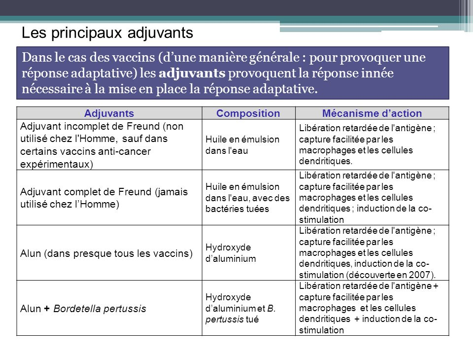 Les principaux adjuvants