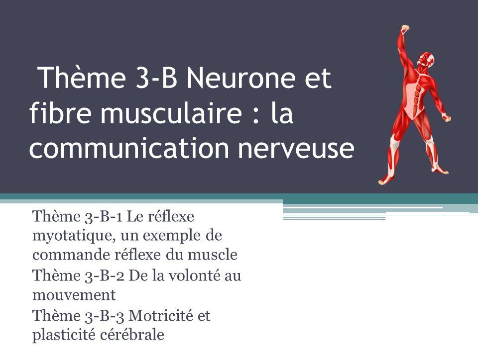 Thème 3-B Neurone et fibre musculaire : la communication nerveuse