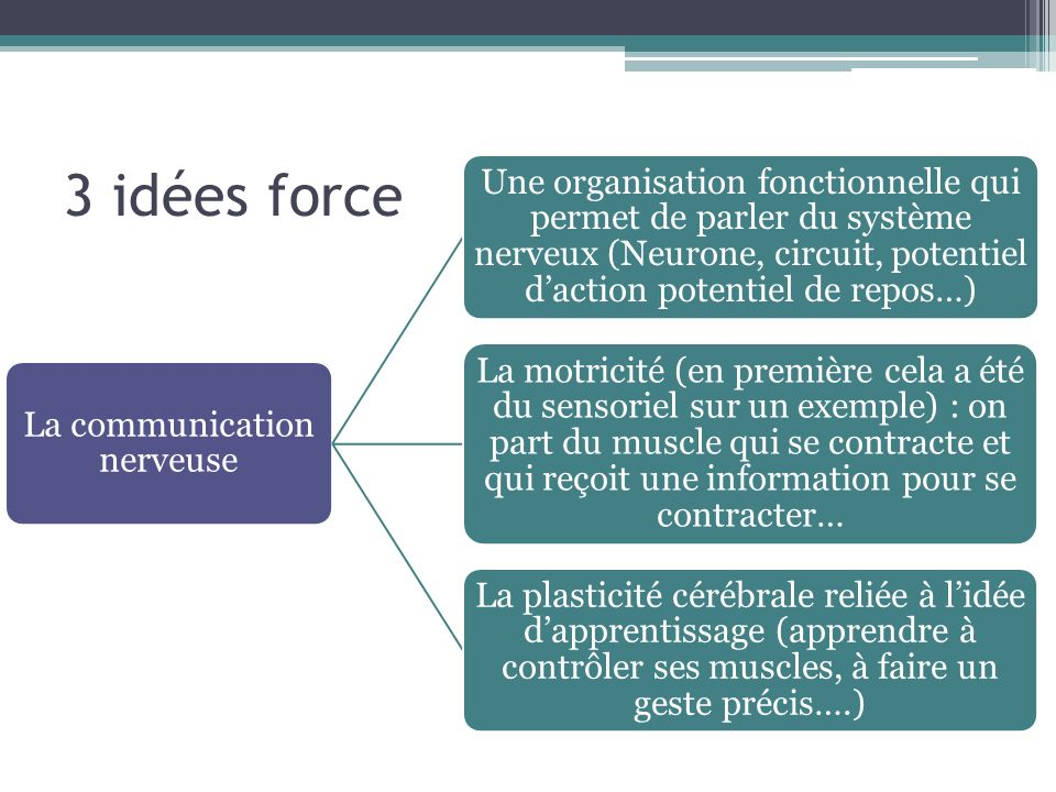 La communication nerveuse