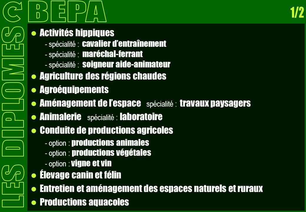 BEPA 1/2 LES DIPLOMES Activités hippiques