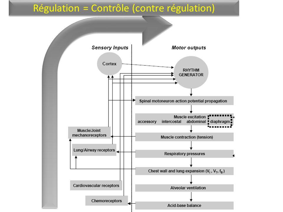 Régulation = Contrôle (contre régulation)