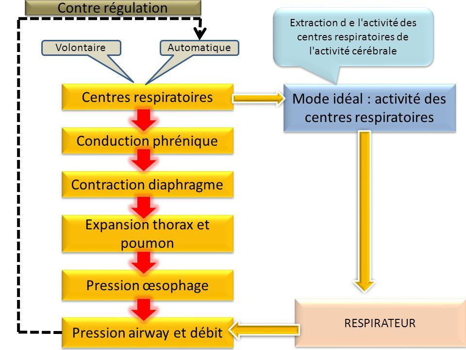 Centres respiratoires Mode idéal : activité des centres respiratoires