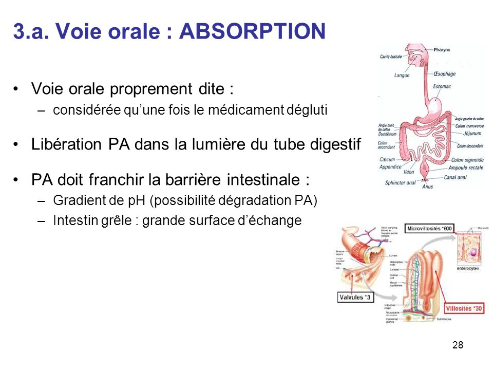 3.a. Voie orale : ABSORPTION