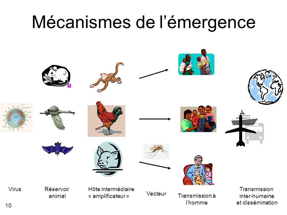 Mécanismes de l'émergence