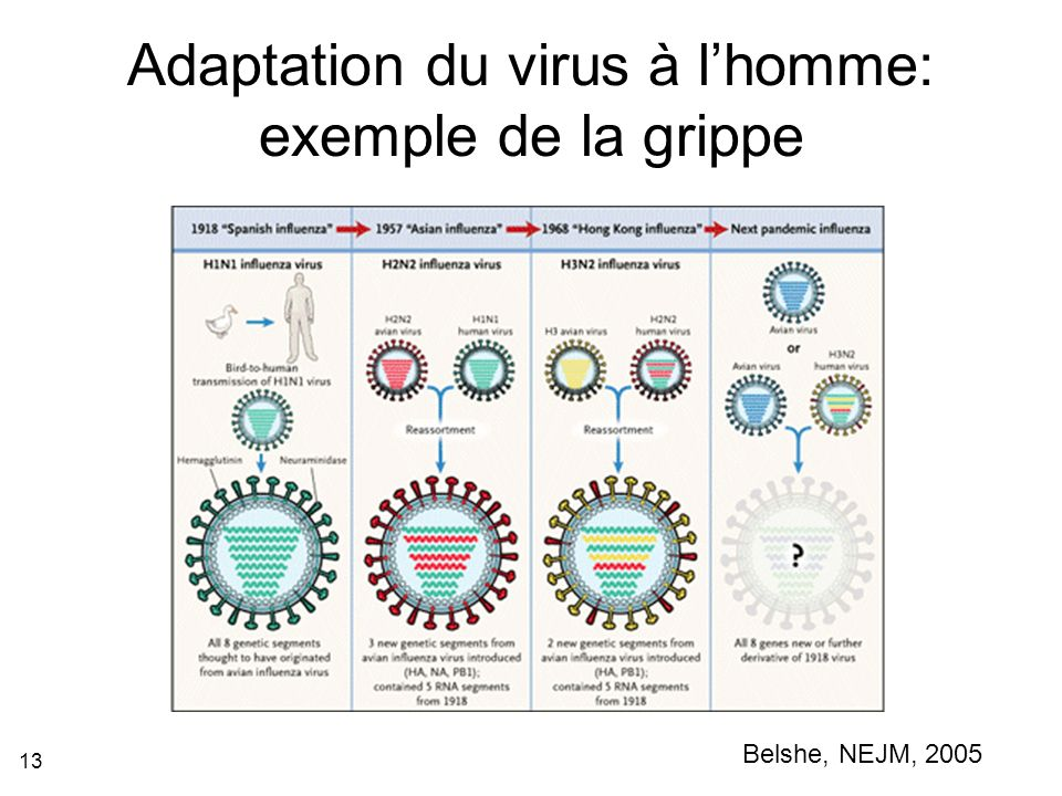 Adaptation du virus à l'homme: exemple de la grippe