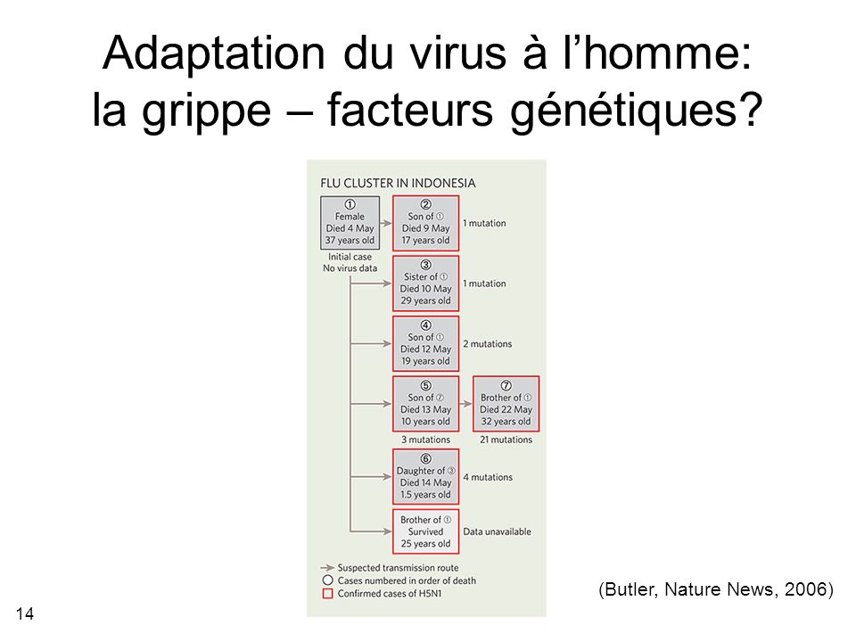 Adaptation du virus à l'homme: la grippe – facteurs génétiques