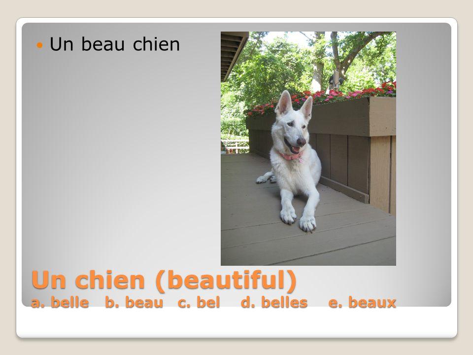 Un chien (beautiful) a. belle b. beau c. bel d. belles e. beaux