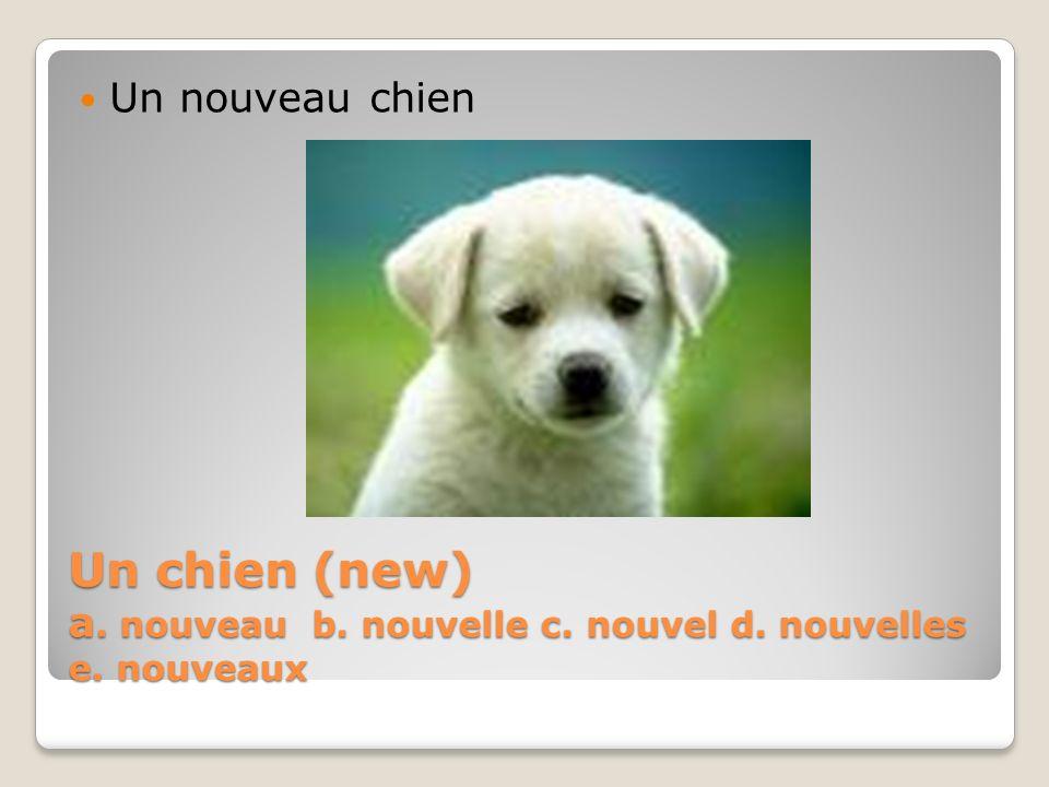 Un nouveau chien Un chien (new) a. nouveau b. nouvelle c. nouvel d. nouvelles e. nouveaux