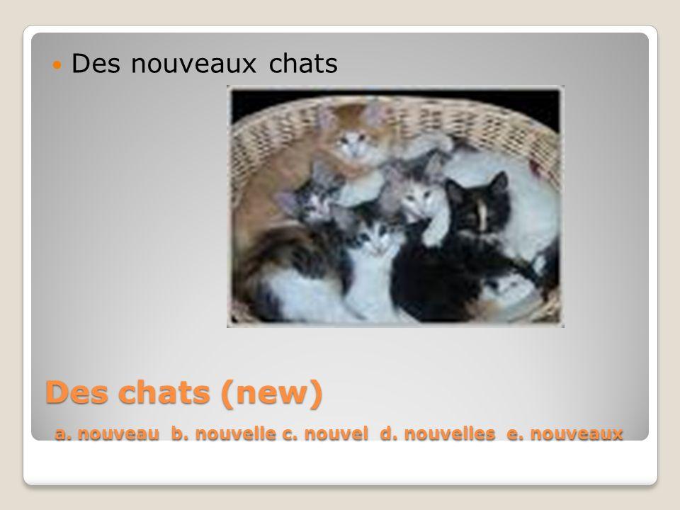 Des nouveaux chats Des chats (new) a. nouveau b. nouvelle c. nouvel d. nouvelles e. nouveaux