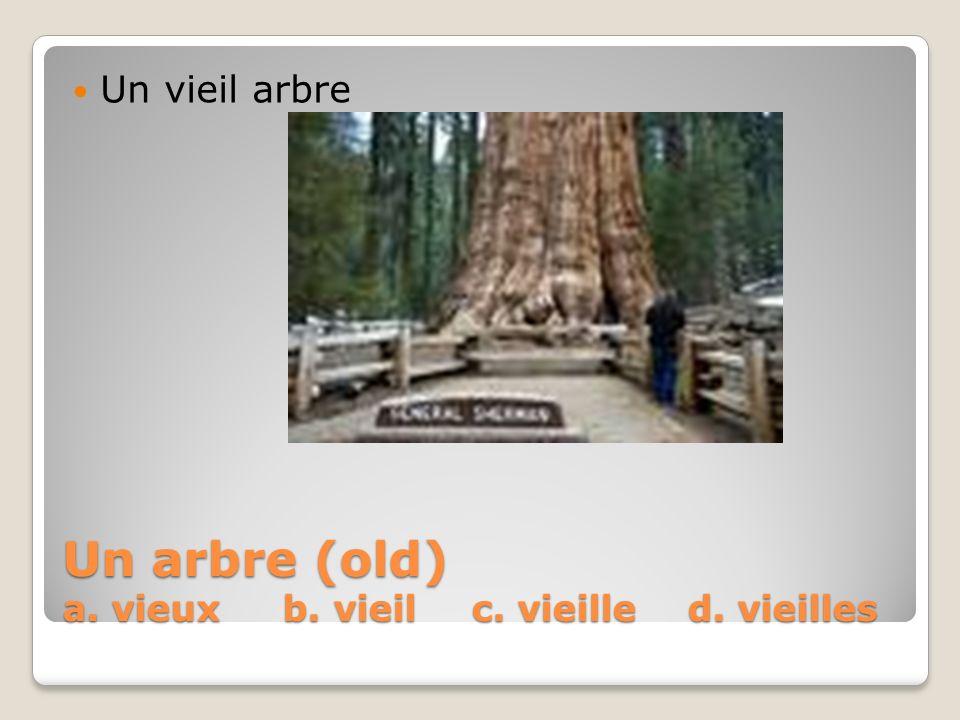 Un arbre (old) a. vieux b. vieil c. vieille d. vieilles