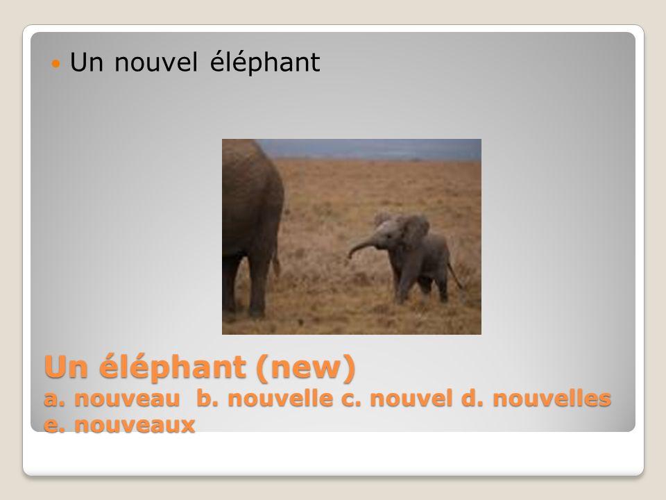 Un nouvel éléphant Un éléphant (new) a. nouveau b. nouvelle c. nouvel d. nouvelles e. nouveaux